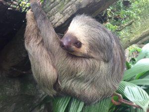 Sloth at Centauri Arts Retreat