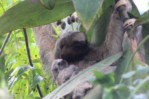 Sloths at the writing retreat