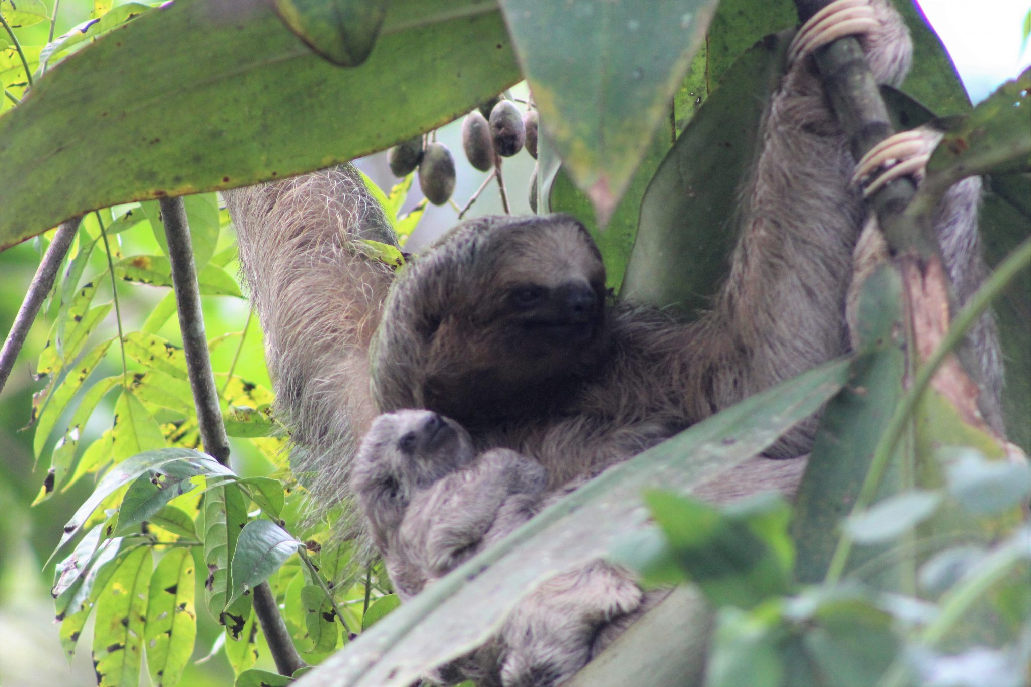 Sloths at the writing retreat